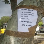 Outrage over Coral Trees to be removed at Tea Gardens Waterfront