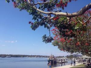 Tea Garden Coral Trees