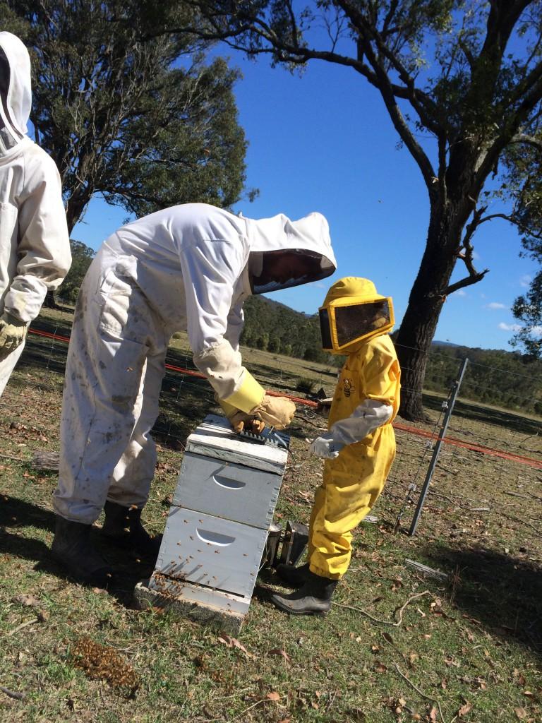 Nabiac Beekeeping