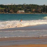 Black Head Beach shark attack, man 65 with leg wound
