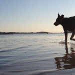Leash free debate for dogs on beaches