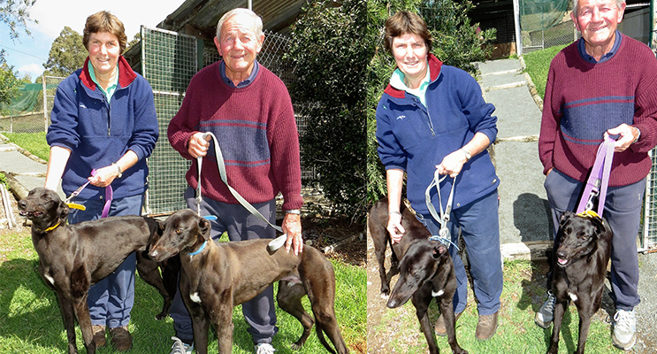 GREYHOUND OWNERS: Debbie Robinson and John Loughran with their much loved greyhounds Oscar and Little One.