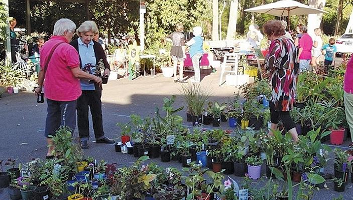 Plenty of plants on sale.