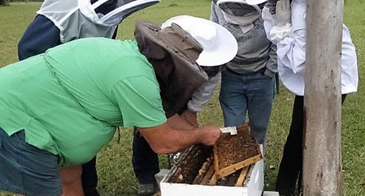 BUZZING BEES: Club members examine bee frames