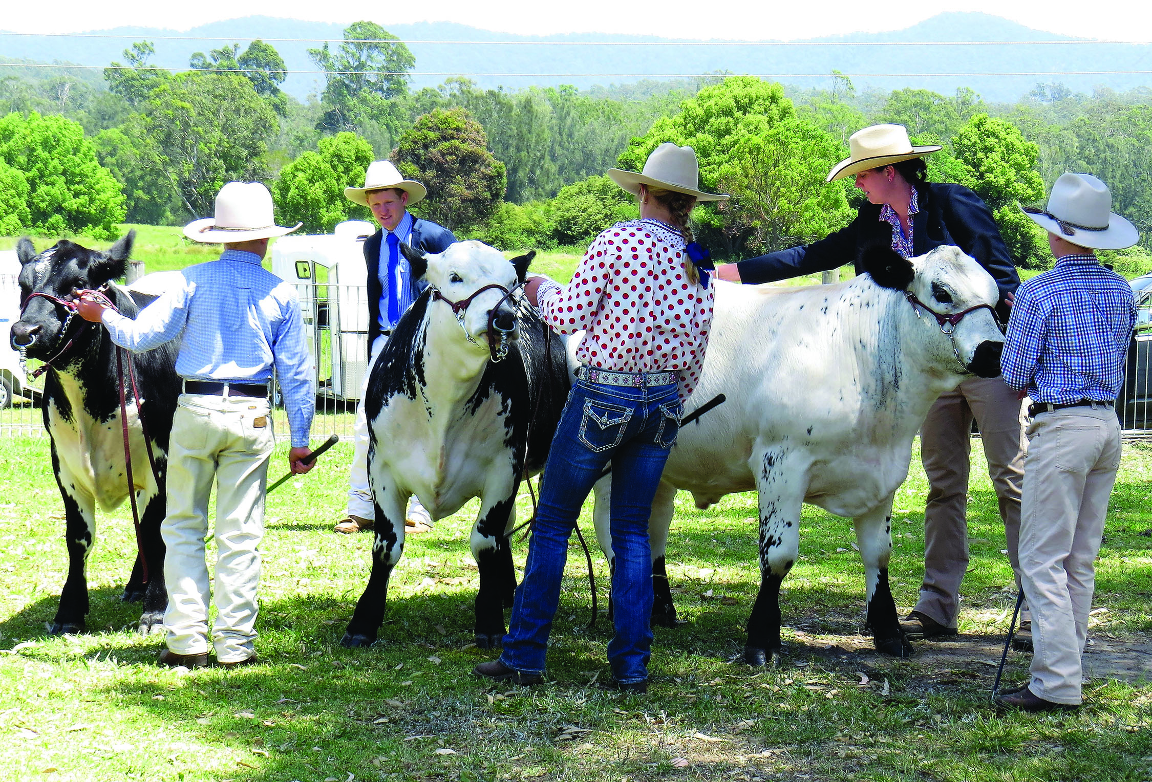 COMPETITION: Rachel Hancock and Ben Sullivan judge the cattle competition
