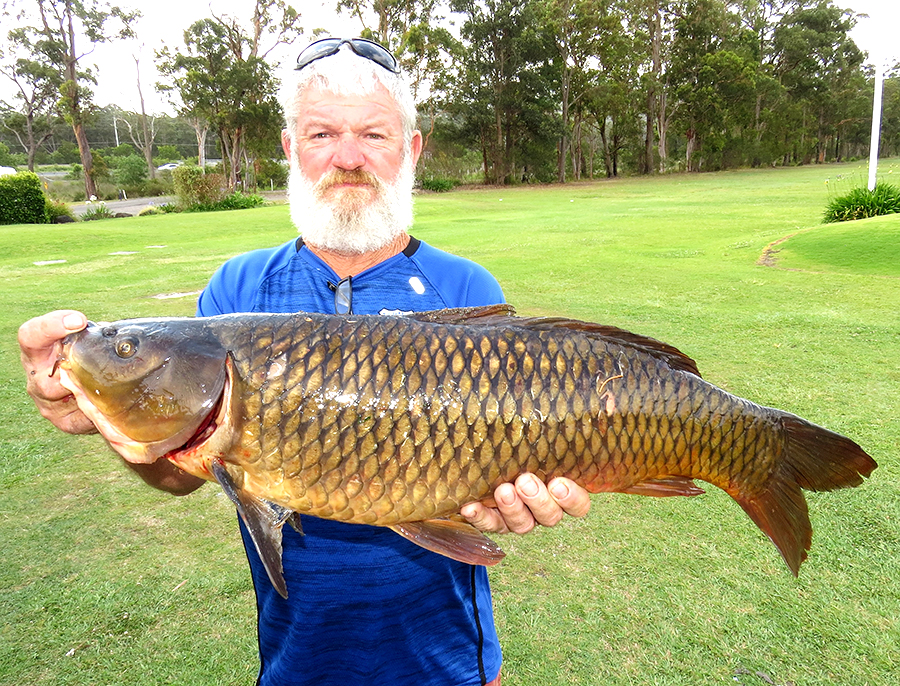 c8a4b822373e European Carp caught in Myall River near Bulahdelah