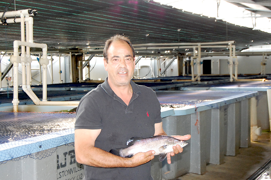 Nick Arena with a Barramundi.