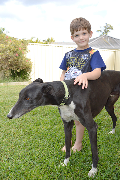 586e916dd97e Who Let The Dogs Out  Port Stephens Council Dog Barking Policy Under Review  · Medowie ...