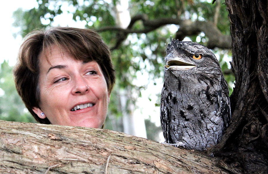 WILDLIFE CARER: Teresa Mort with a Tawny Frogmouth in her care.