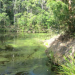 Signs of stress for some river systems in MidCoast LGA