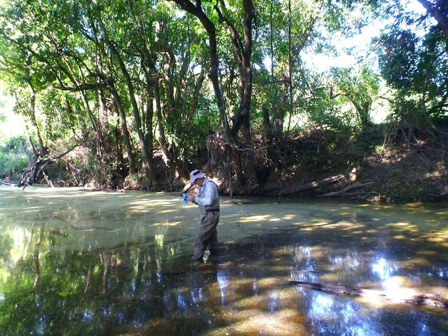 Steve Jacobs, Scientist with the NSW Office of Environment and Heritage, takes samples of the algal blooms found in the Karuah catchment.