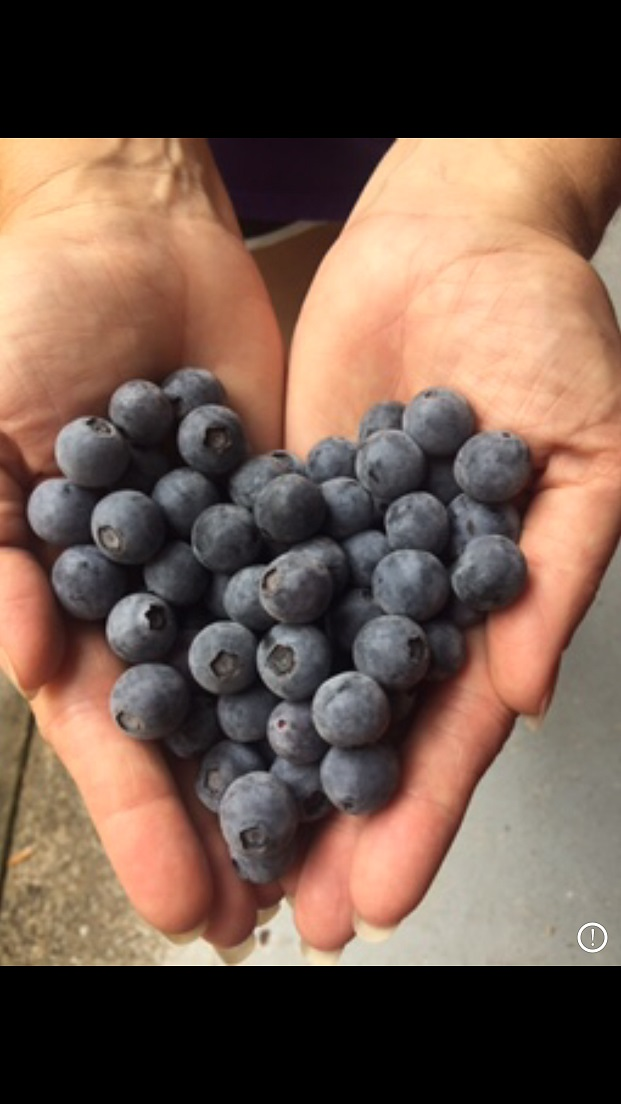 Tracey holds a handful of Organic Blueberry Love.