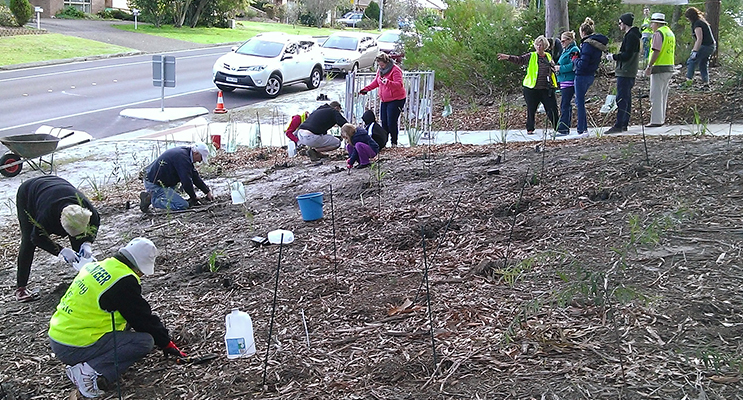 2400 Native trees and grasses have been planted in the area. Photos supplied