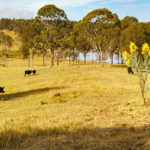 29 Viney Creek Road, Tea Gardens is up for auction