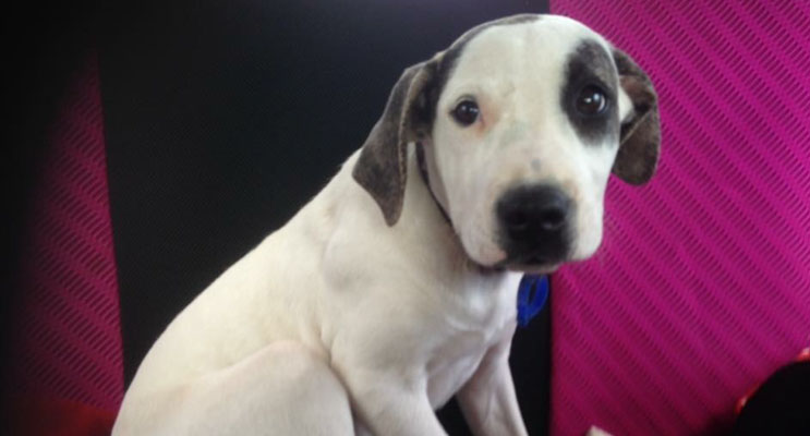 Sweet Oliver is looking for a forever home.