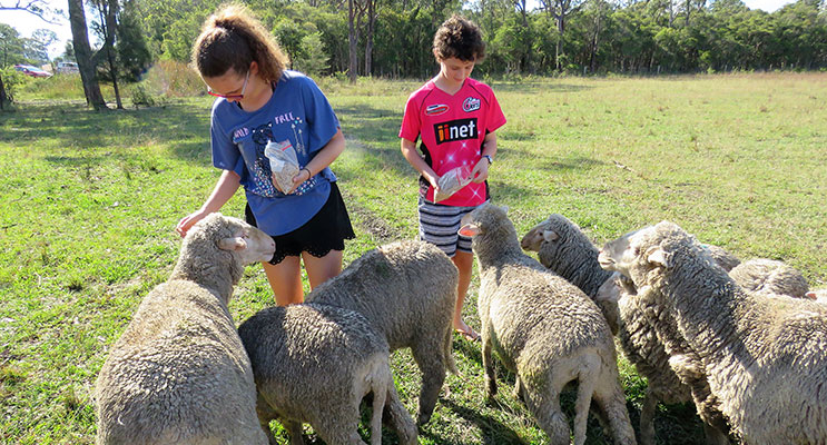 Chris and Natalie Guyot feed the lambs at Lucy Land Merino Farm.