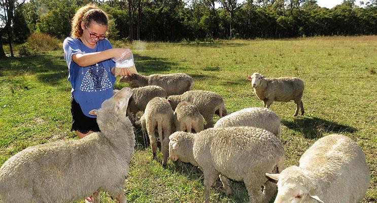 Natalie Guyot feeding the lambs at Lucy Land Merino Farm in Bulahdelah.