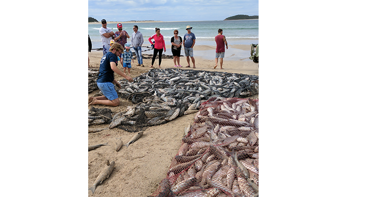 Commercial fisherman with their nets on Fingal Beach attracted a huge crowd on Saturday, during this season's mullet run. Photos courtesy of Prue Bamford