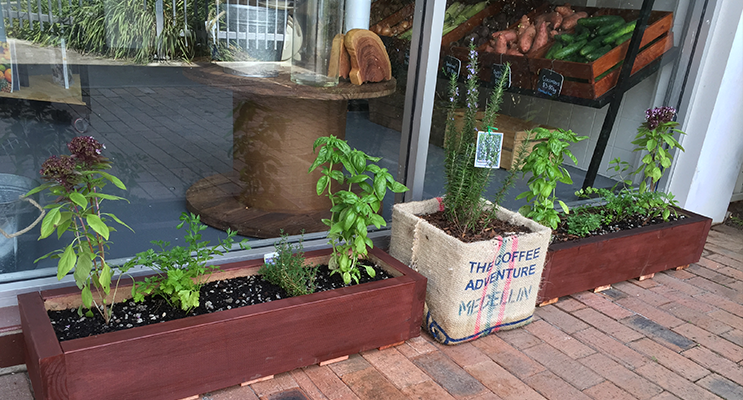 The Natural Food Collective will eventually be offering free herbs for the community in their garden beds outside the shop.