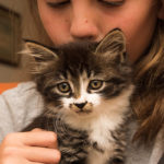 Furever homes need by Medowie Cat rescue group