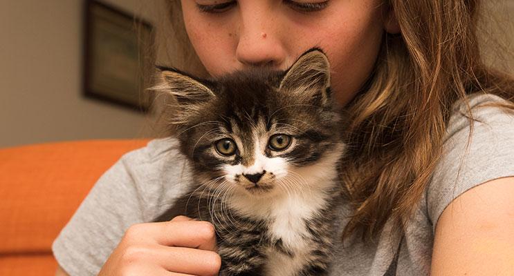 Furever Home Cat Rescue