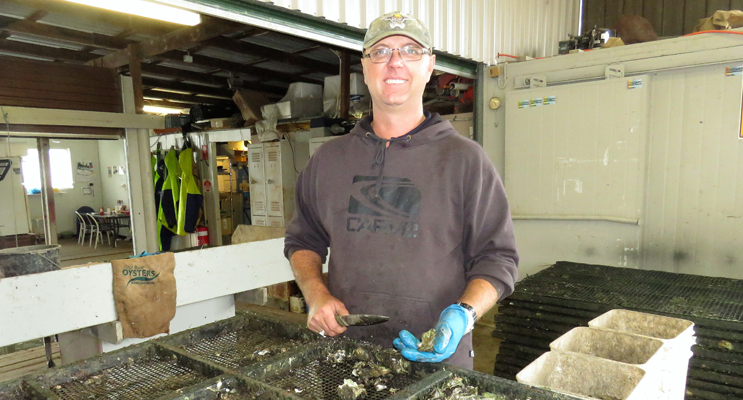 Stephen Cole has been involved in the oyster industry all his life.