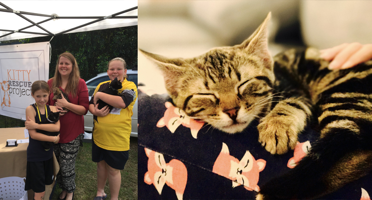 Indianah Wilson, Emily Mathew and Amanda Warren at the Medowie Markets with some of the kittens. (left) Pippa is searching for a snuggle bunny. (right)