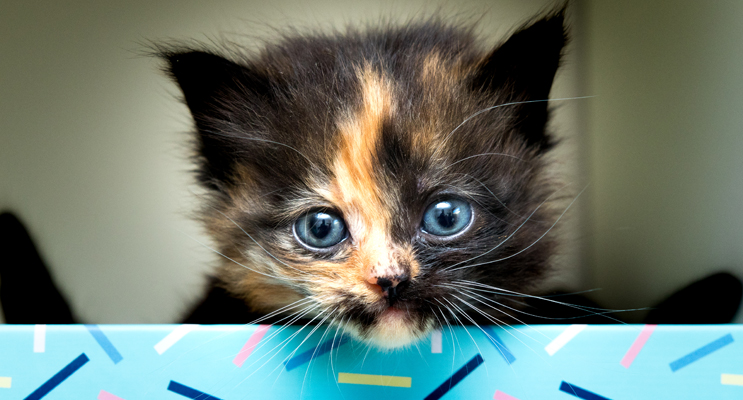 Malteaser and his siblings will soon be looking for homes.