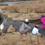 Williamtown's Red Zone rock pool walk a success