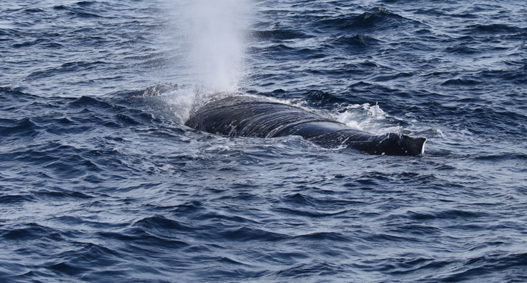 Whale watching season offers locals and tourists a whale of a time. By Leanne Maffesoni.