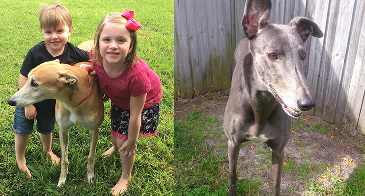 Xander (aged 3) and Aubrey Miller (aged 5) with retired racing greyhound, Boris. (left) Buddy the greyhound.(right)