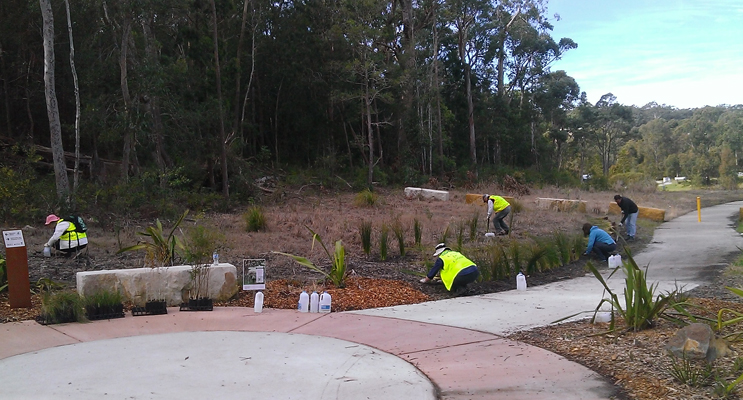 Community working bee planting Ngioka Centre tube stock plants.