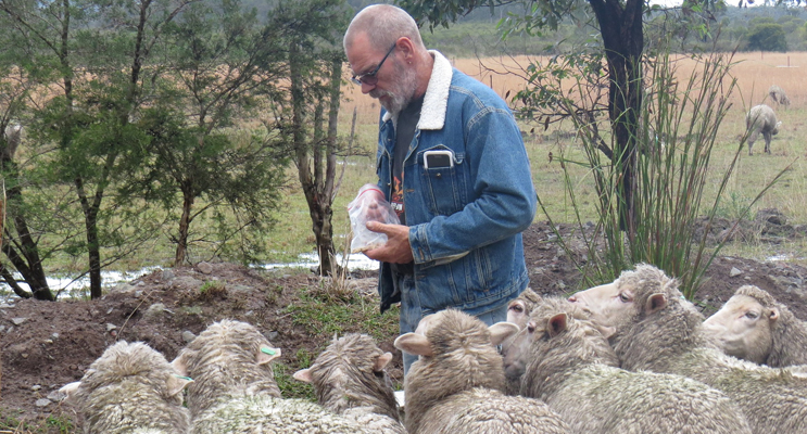 Great Lakes Food Trail: Bruce Cameron feeds the sheep at Lucy Land Merino Farm.