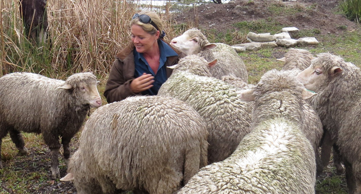 Julie Steepe from Lucy Land Merino Farm.