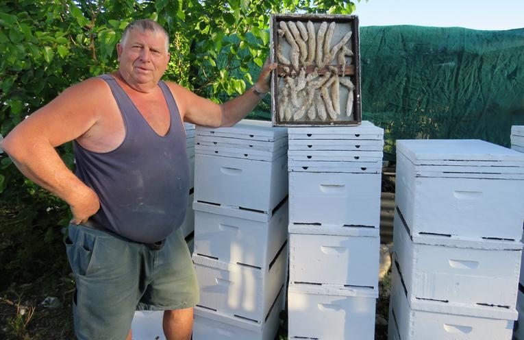 Backyard Bees: Gary Haynes has been producing honey for 30 years.