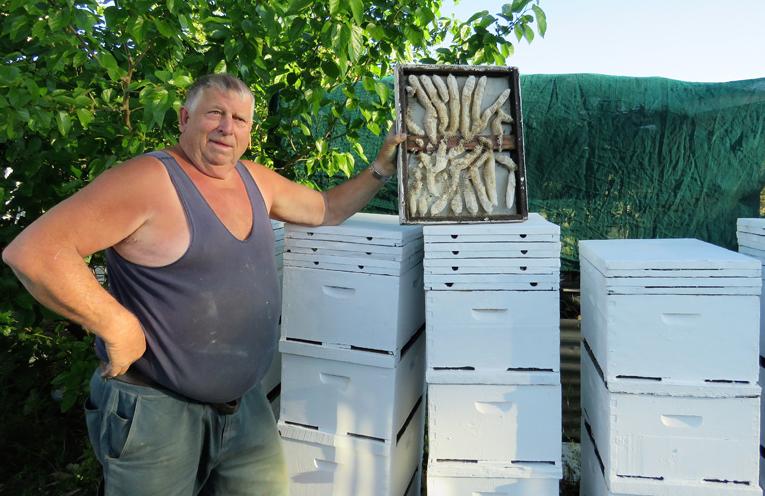 Gary Haynes said spring swarms are common.