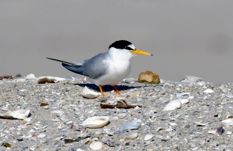 WINDA WOPPA: Home to the endangered Little Tern.