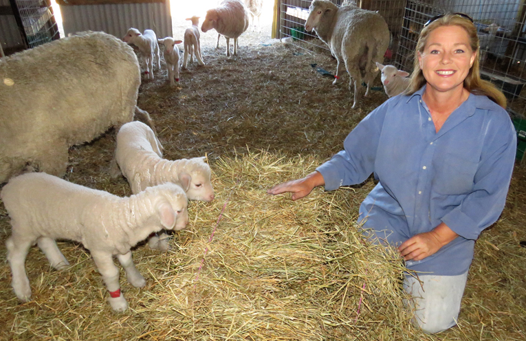 Julie Steepe with some of her flock at Lucy Land Merino Farm.