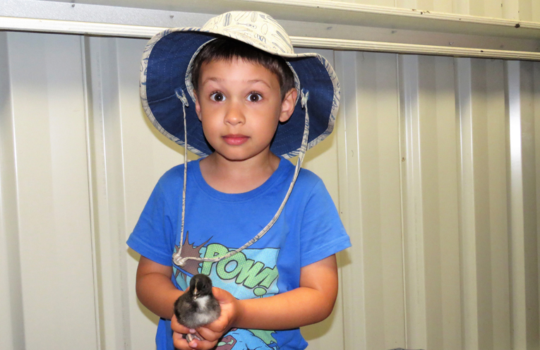 Ethan Winfield with a baby chicken at Topi Open Range.