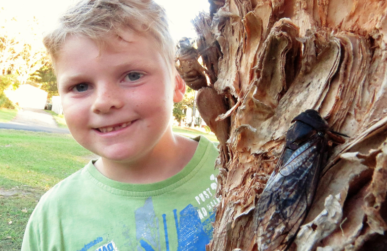 Zackery Moran said the trees are teeming with cicadas this year.