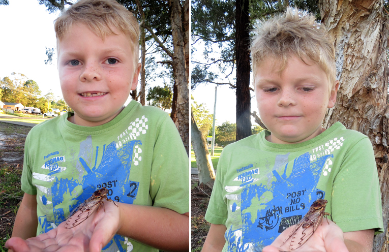 Zackery Moran holds a double drummer cicada.