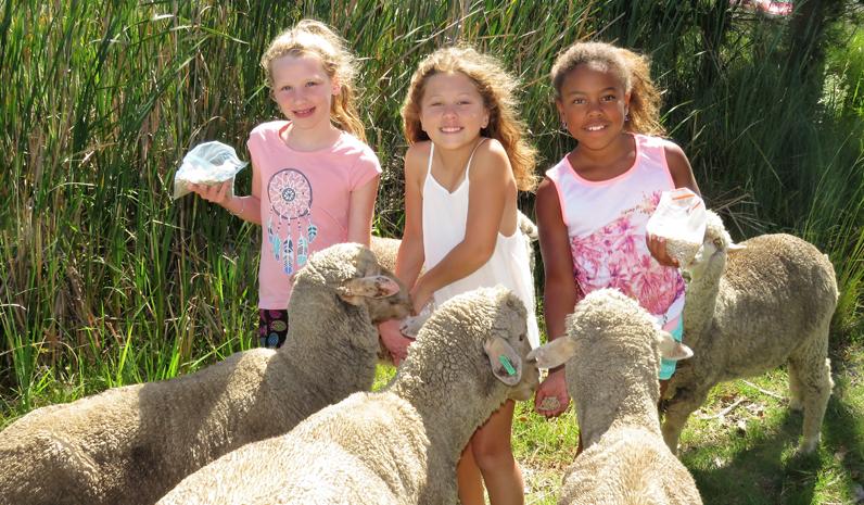 Danielle, Tegan and Nyasha feed the sheep at Lucy Land Merino Farm.