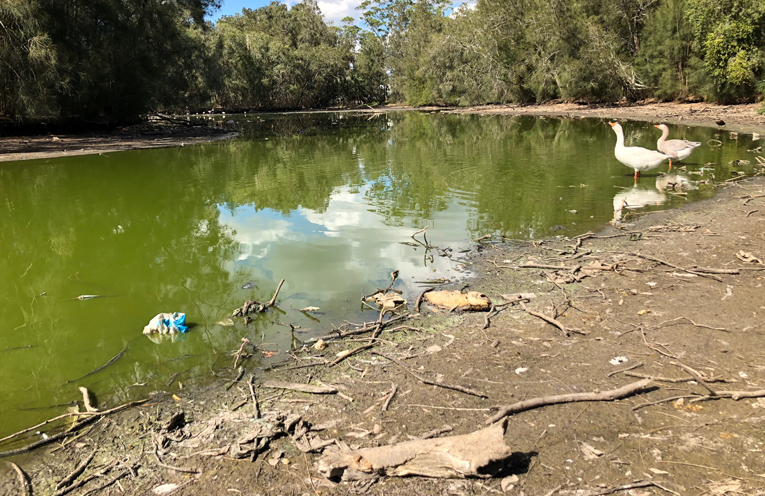 It is a dire situation for the animals who call this duck pond home,