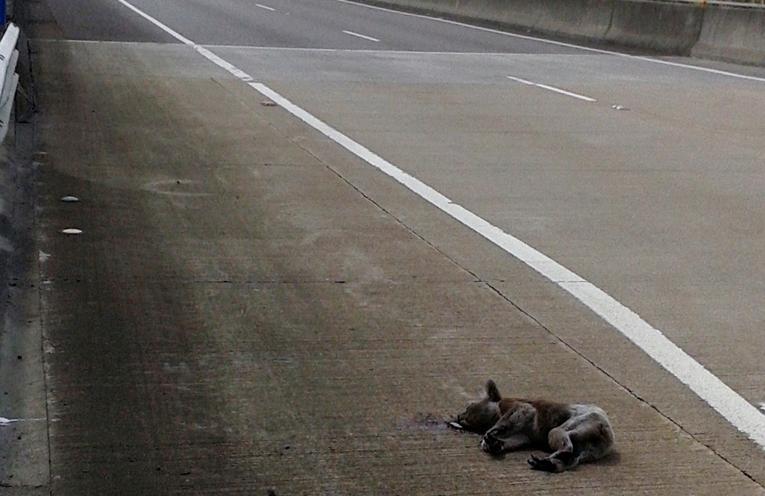 Koala hit on Karah River Bridge