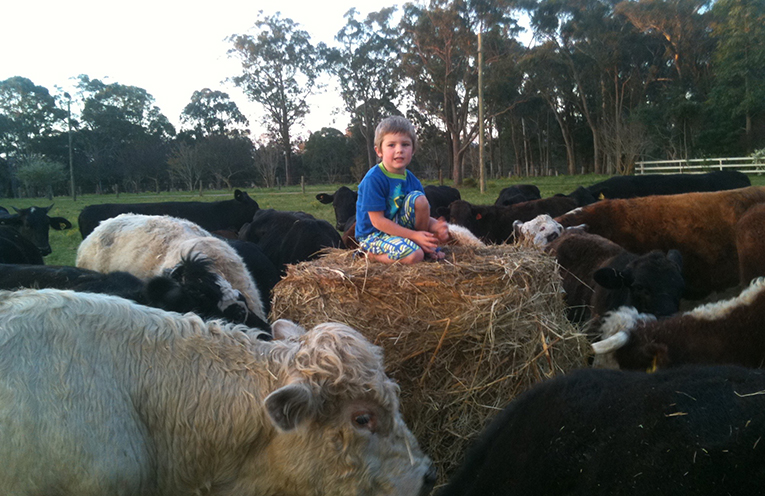 A young helper sits atop of bale of hay destined for a worthy New South Wales farmer.