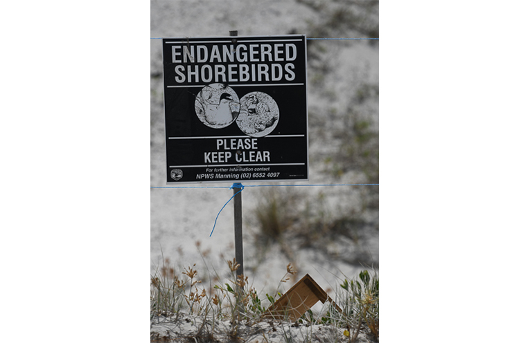 WINDA WOPPA: Signs erected to protect Terns.