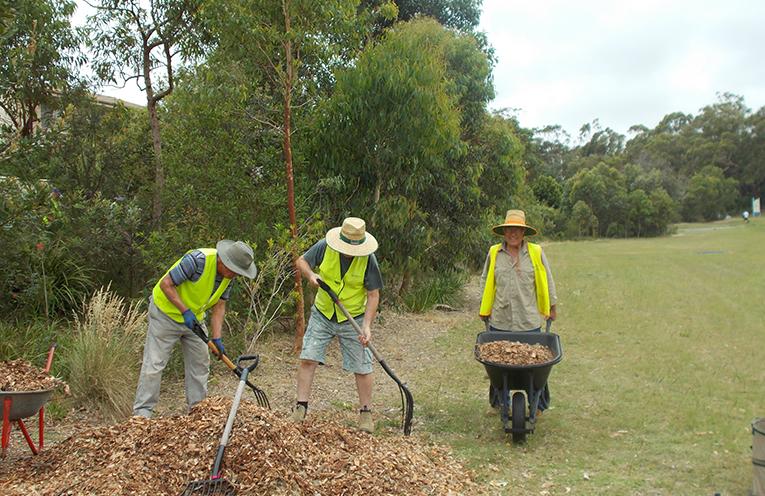 Landcare Volunteers David Naylor, John Priddy, Vince Perkins hard at work in Corlette.