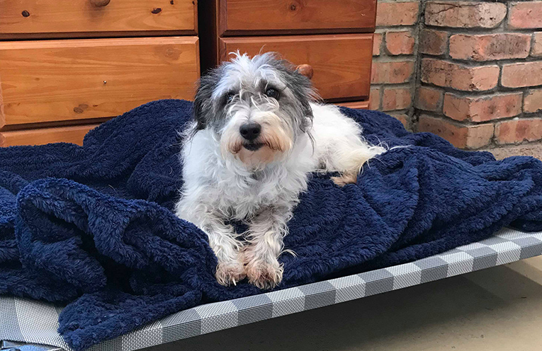 7 year old 'Prieka', adopted as a rescue puppy now lives her days relaxing in Port Stephens.
