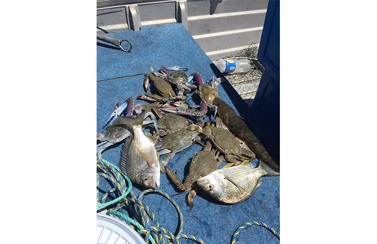 Results of a morning's fishing for one lucky local.
