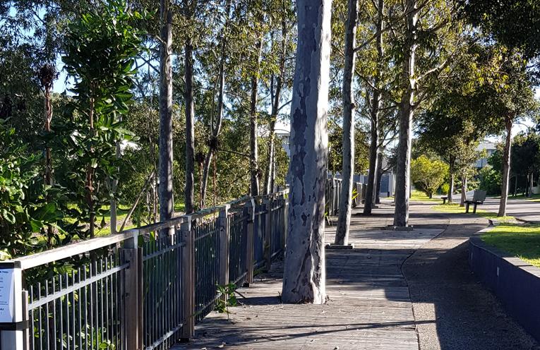 Pirralea Gardens Park in Nelson Bay Boardwalk.